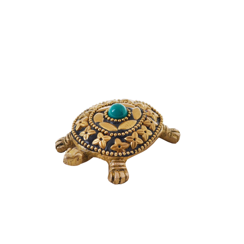 Small tortoise d 2